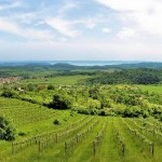 Top Wine Regions in Hungary