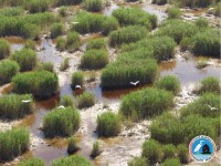 Marshlands with water birds at lake Ferto